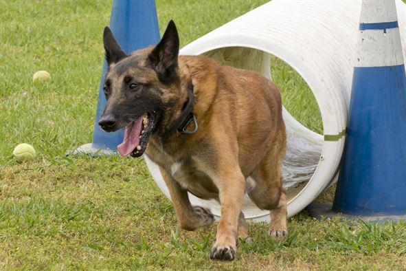 Sind Hunde uns ähnlicher als wir denken?