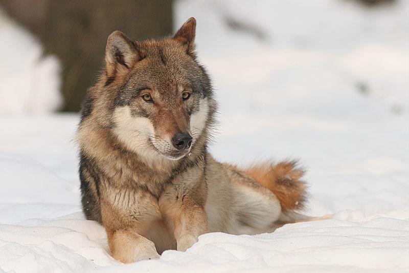 Nordische Hunde und ihre Artenvielfalt